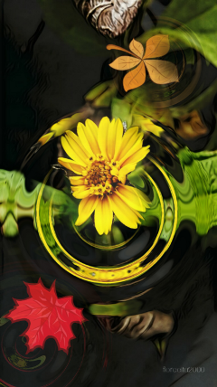 fall autumn flower photography myphoto