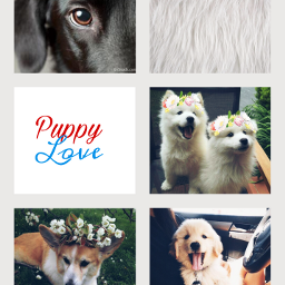 failedattempt dogs collage aesthetic freetoedit