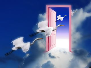 freetoedit cranes birds surreal inthesky
