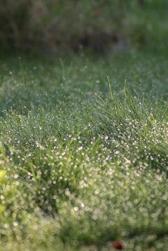 freetoedit dew green autumn