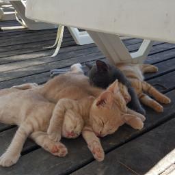 freetoedit kity cute cat kedi