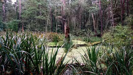 landscape nature woodland grass lake freetoedit