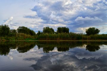 nature mirror reflection danube naturephotography