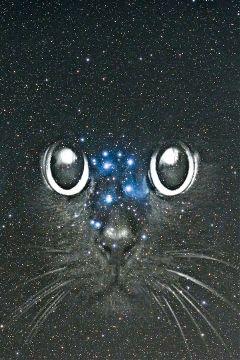 freetoedit black cat galaxy galaxyedit