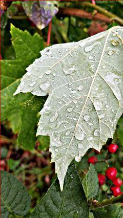 leaf raindrops egphotography