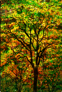 freetoedit pretty colorful