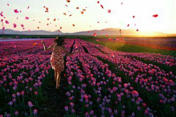 vipshoutout flowers girl sunset