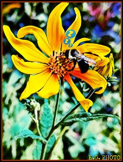 animationmagiceffect bee flower myphoto cute