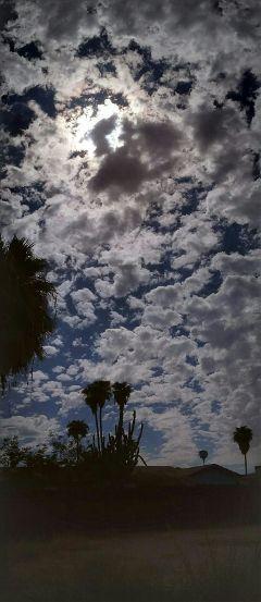 freetoedit beautiful clouds palm
