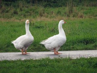 goose nofilter petsandanimals