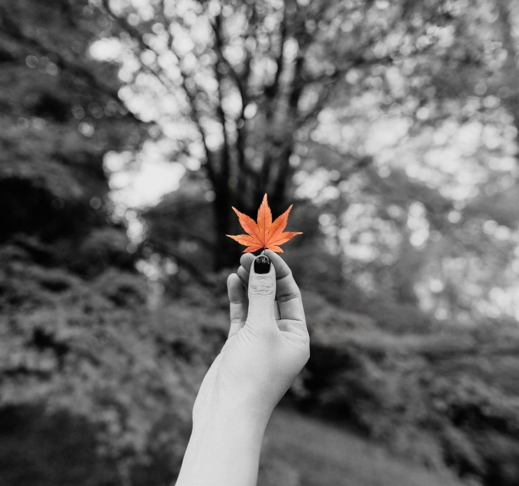 Gray black white color nature photography leaf pa