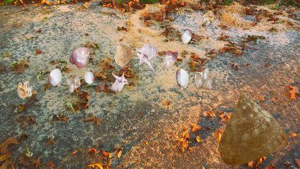 freetoedit myedit sand leaves seashells