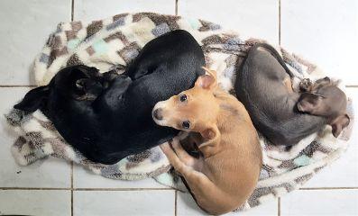 freetoedit photography highangle three dogs