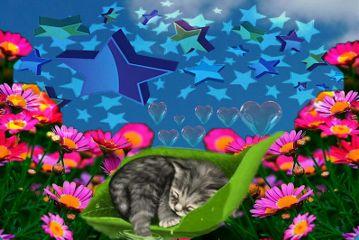 hearts cat stars flowers@carmenplatanito freetoedit
