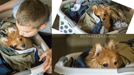 chores laundryday laundry littlehelper lifestyle
