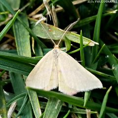 moth egphotography nature