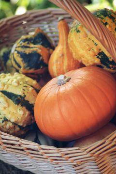 freetoedit autumn autumnvibes
