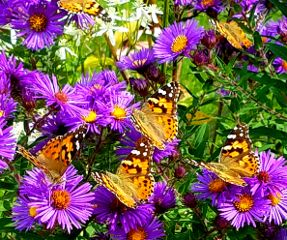 freetoedit butterfly flowers colorful fall