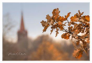 autumn fall focusonforeground dpcfallfeels dpcthecolororange