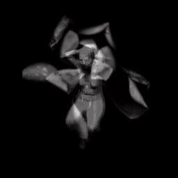 blackandwhite abstract figure dark birth