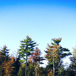 freetoedit trees fall blue
