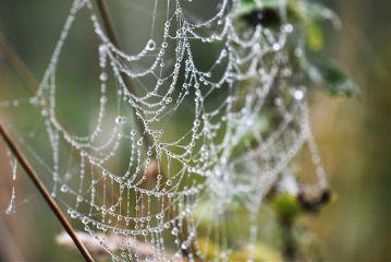 photography nature macro emotion web