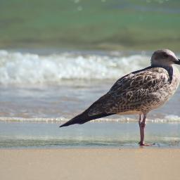 bytheseashore seagull resting catchingsun naturesbeauty