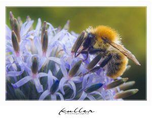 bumblebee flower insect closeup macro