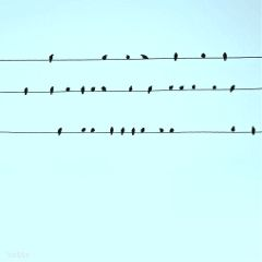 freetoedit birdsonawire againstthesky myoriginalphoto