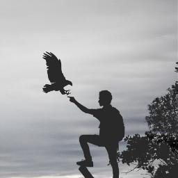 freetoedit blackandwhite dramaeffect tree bird