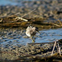 nature naturephotography photography photographyskills photographyislifee