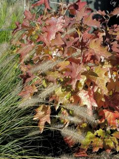 fall autumn leaves colorful freetoedit