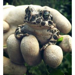 frog frogy frogprince animal animalphotography