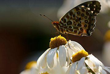 freetoedit nature flower butterflay macro
