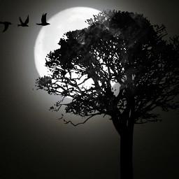 moon clipart tree birds blackandwhite