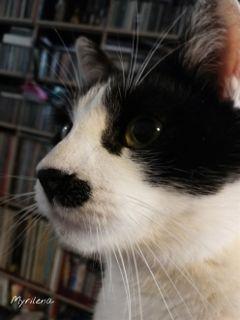 cat cats catsphotography catsofpicsart