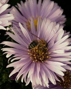 extremecloseup autumn flower bee nature