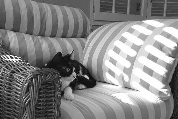 blackandwhite mypet cute catsofpicsart petsandanimals