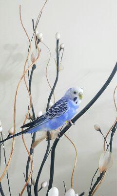 photography birds bird freetoedit