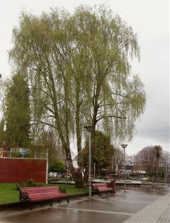 freetoedit square tree cloudy