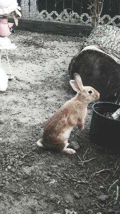bunny animal california