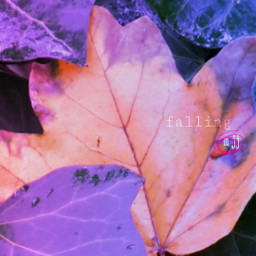photography autumn leaves purple nature ☺🍁