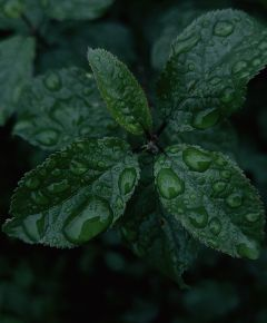 photography nature plant leaves water