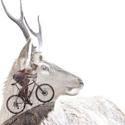 freetoedit doubleexposure bike mountainbike