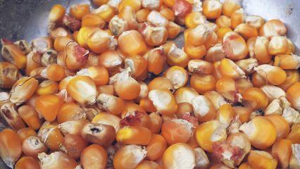 freetoedit maize corn small