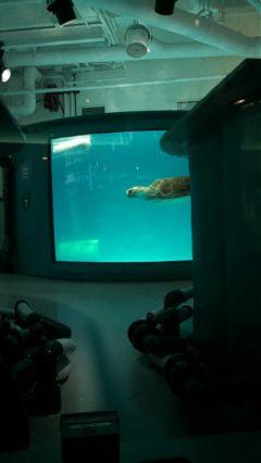 freetoedit turtle healing indoors underwater