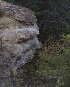 stone nature face natureart trees