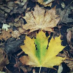 nature autumnvibes autumncolors autumnal leaves