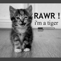 freetoedit snapchat cat babycat cute