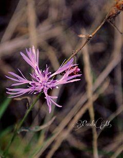 nature flowers closeup purple